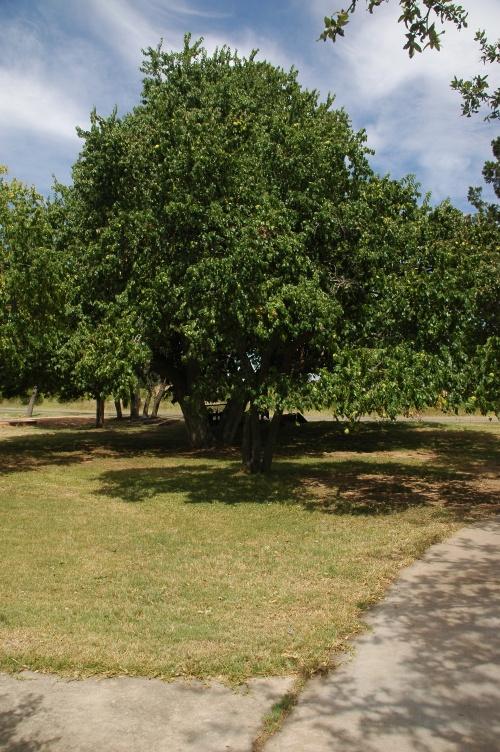 """A """"Small"""" Tree"""