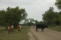 A Texas Roadblock