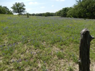 Texas Hill Country Impressions