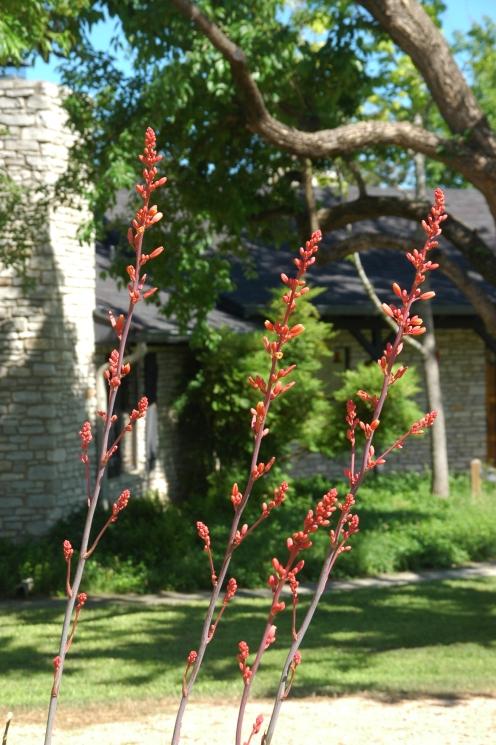 driveway shrubs