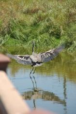 birding centre