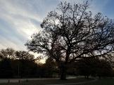 Chautauqua Park