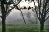 mystical morning