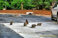 Hotel Kitties