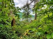Coot's Lake
