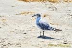 Port A. Birds