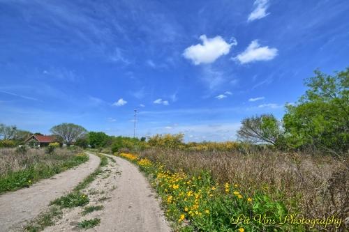 wildflower driveway