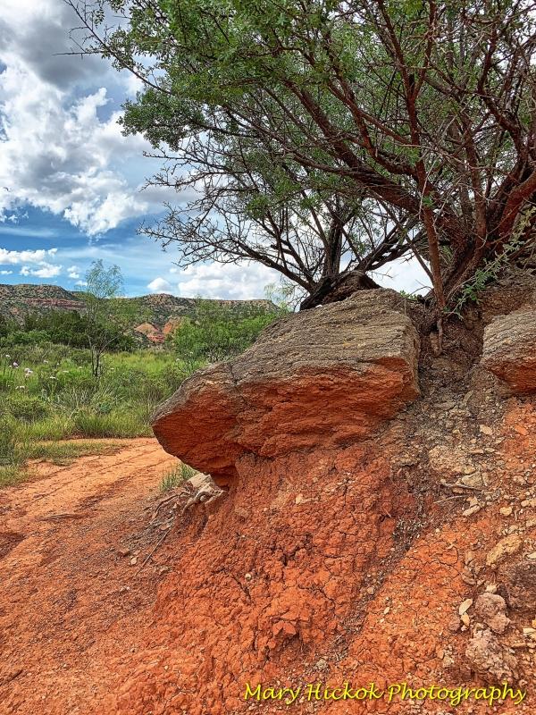 Juniper Rievrside Trail