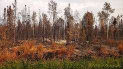 McKinley Fire 2019