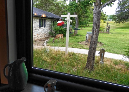 deer close to the front door