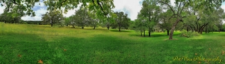 front and side yard panorama